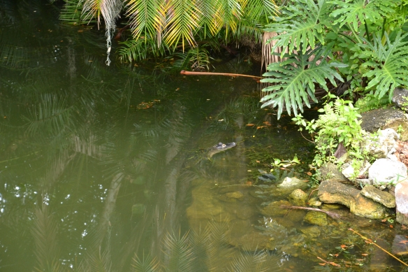 Obligatory alligator, because Florida